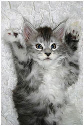 Это была Джейн. Она родилась осенью во французском питомнике кошек.